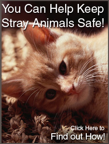 You Can Help Keep Stray Animals Safe! Find Out How