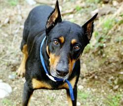Service Dog Training Dallas Tx