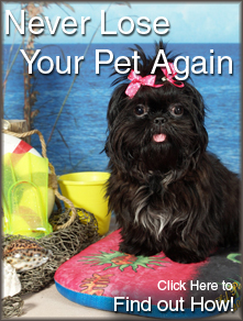 Never Lose Your Pet Again. Find Out How